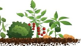 agroecologia 0