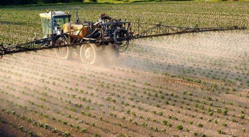 pesticida batata