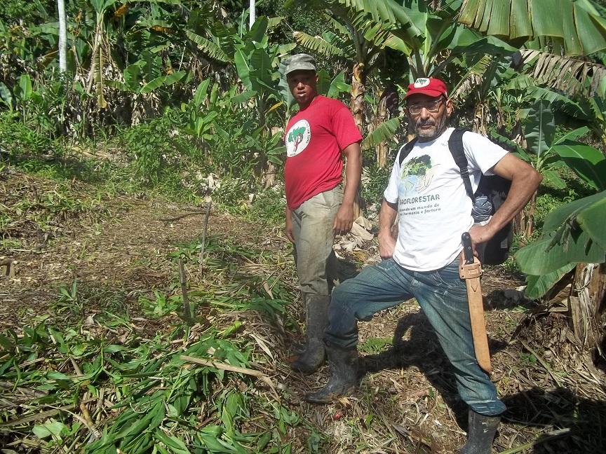 pratica agrofloresta