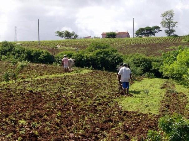 agroecologia globo