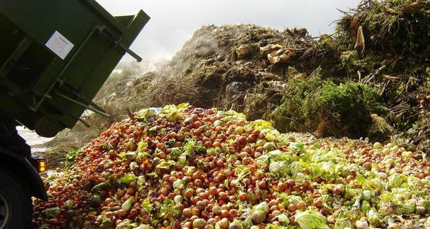 desperdicio alimento