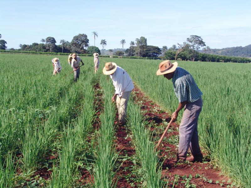 agricultores teixeira