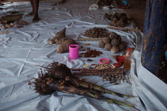Algumas sementes e mudas apresentadas na II Feira Mebengôkré de Sementes Tradicionais. Foto: Simone Giovine/AFP